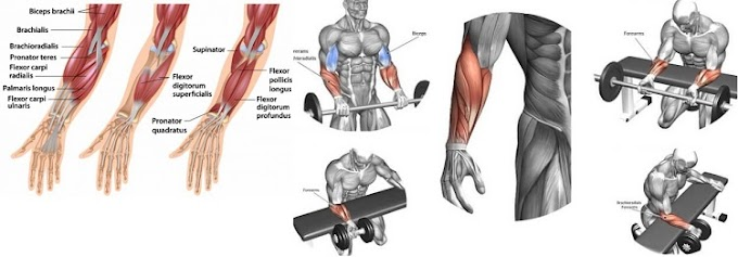 Big Exercises to Blow Up your Forearm