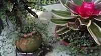 Delicate foliage with bromeliad - Anne's garden, Stratford, CT