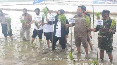 Bersama Staf Ahli Mentan RI, Wabup Bone Tanam Padi di Desa Talungeng