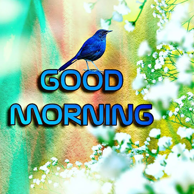 beautiful good morning images free download