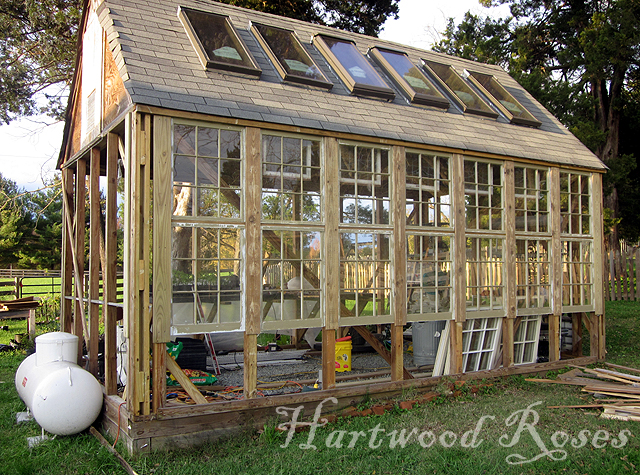 Hartwood Roses Greenhouse South Wall Windows Finished