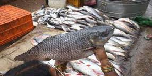 Bihar-nahi-aa-payegi-aandhr-ki-machlliya
