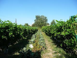 Браилов. Свято-Троицкий монастырь. Огород и виноградник