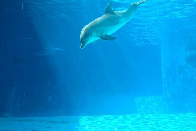 delfini e bambini