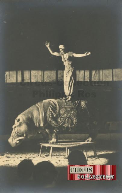 equilibre sur le dos d'un. hipopotame