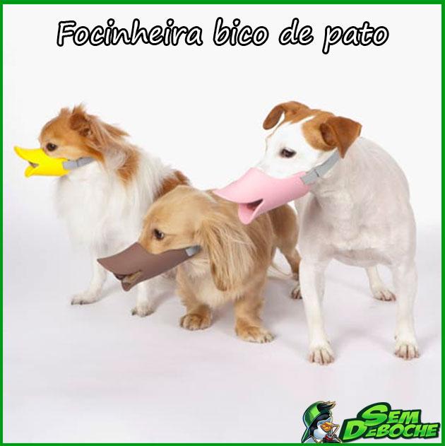 FOCINHEIRA BICO DE PATO