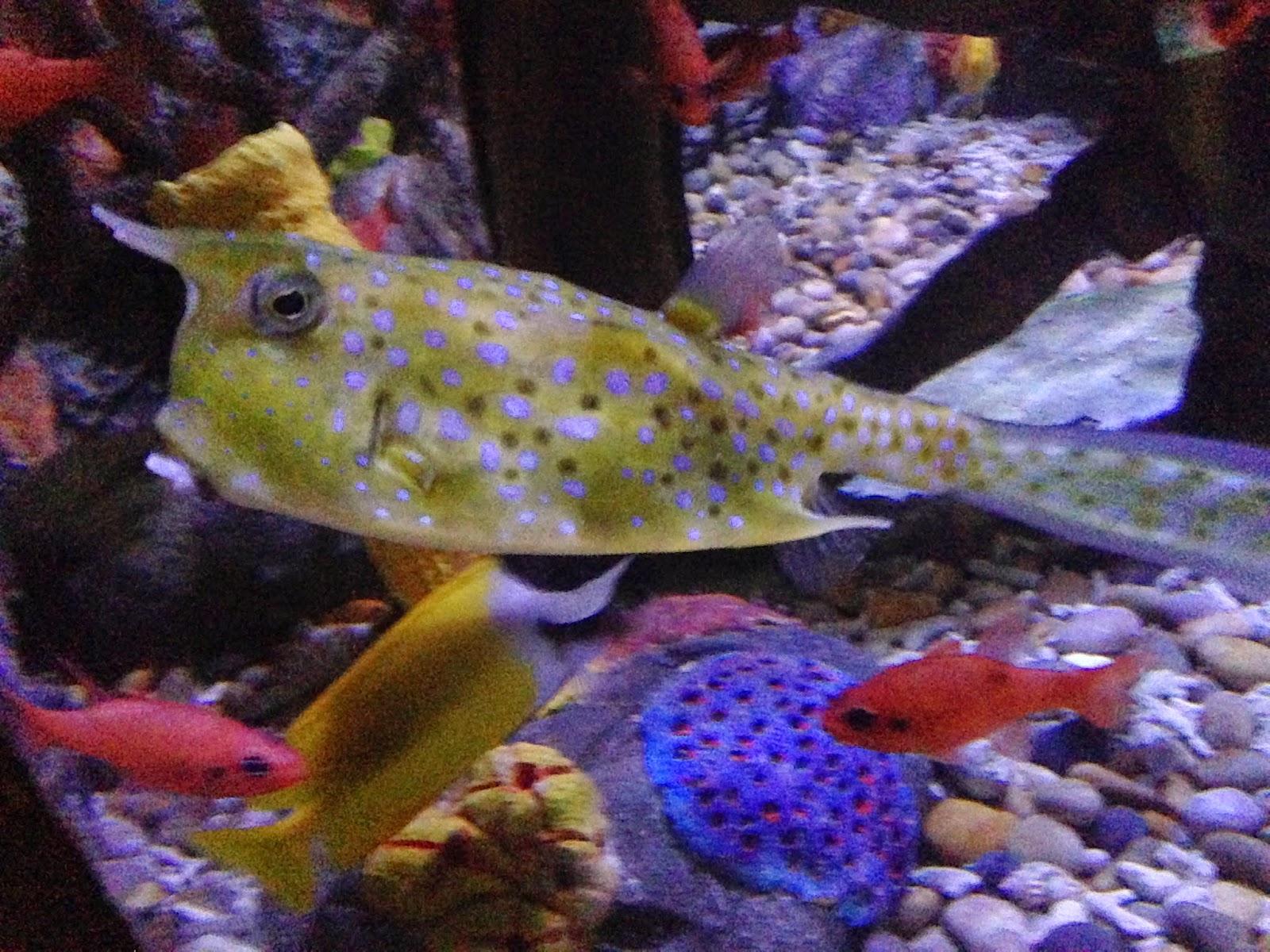 slug fish