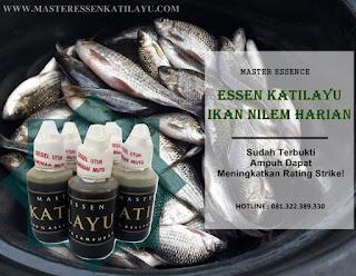 Essen Katilayu Ikan Nilem Harian