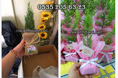 Türk geleneği bebek doğum fidanı 2