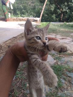 lovely cat image