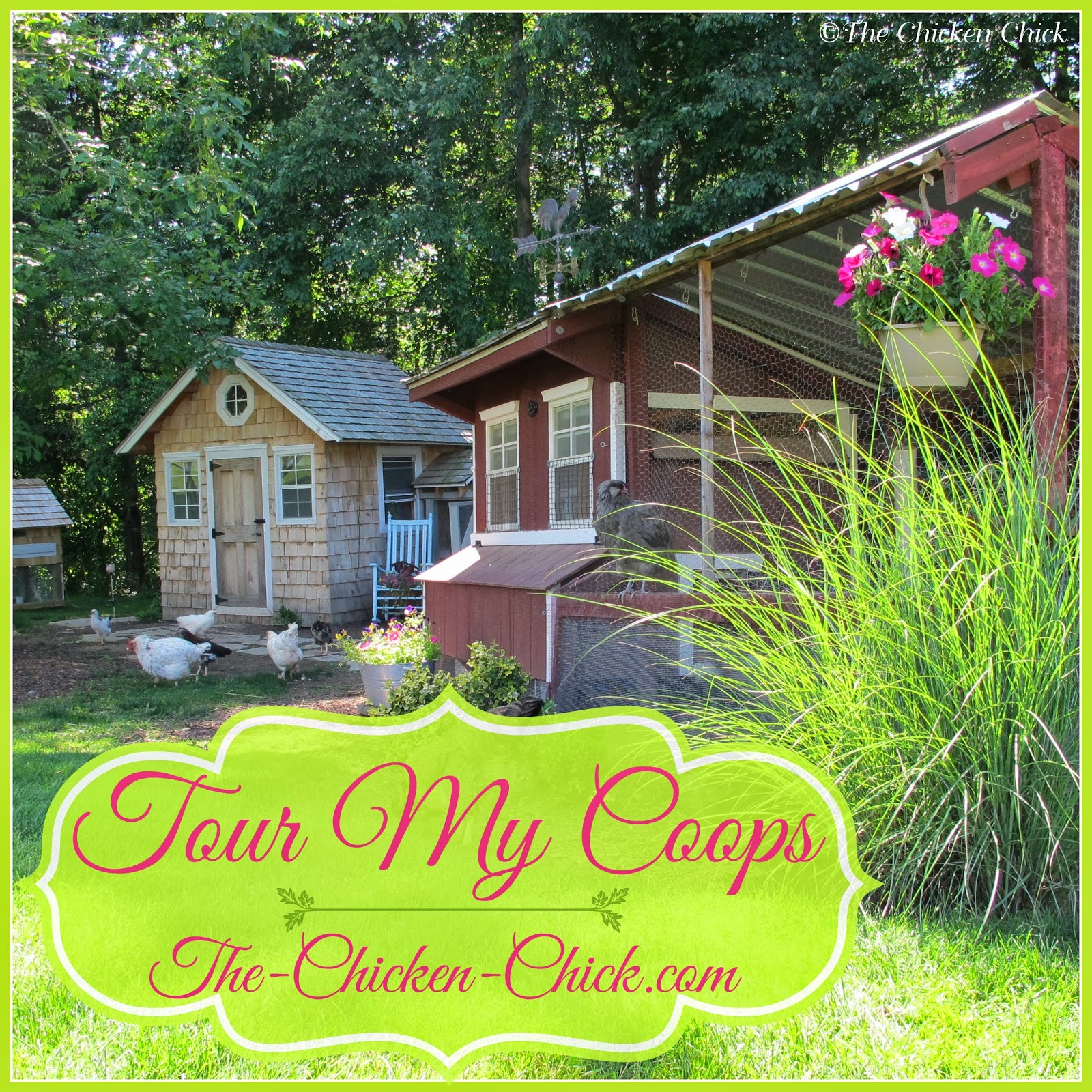 Tour my chicken coops as they have evolved over time