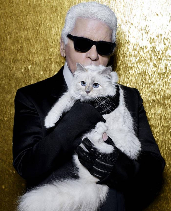 The millionaire cat of Karl Lagerfeld.