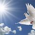 الصحراء الغربية : 133 عام بلا سلام
