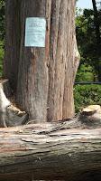 Tree removal notice, Elizabeth Park - West Hartford, CT