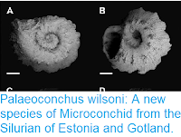 https://sciencythoughts.blogspot.com/2016/09/palaeoconchus-wilsoni-new-species-of.html