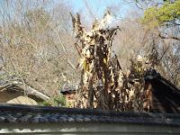 Artwork on a roof - Kyoto Gyoen National Garden, Japan