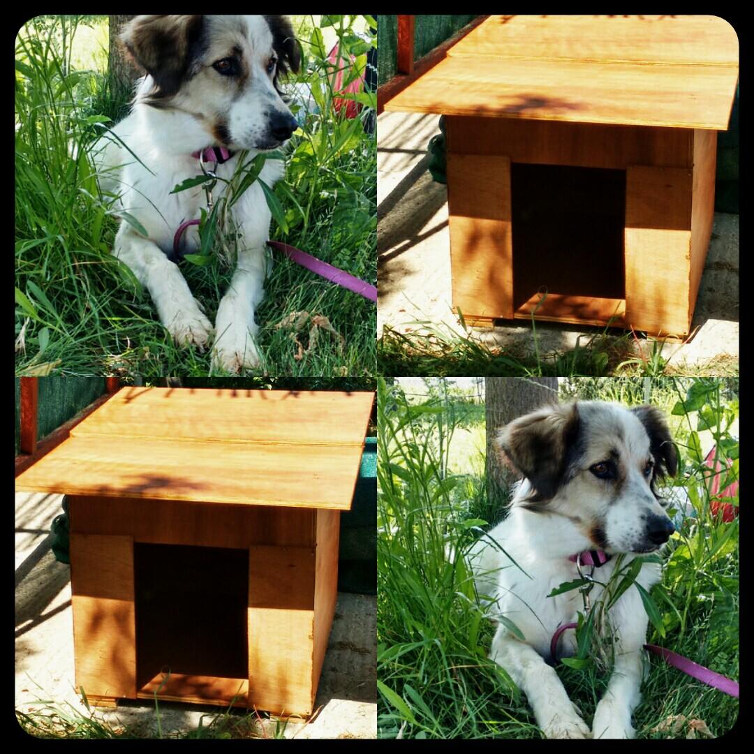 6c5473490dae DIY σπιτάκι σκύλου vol.1