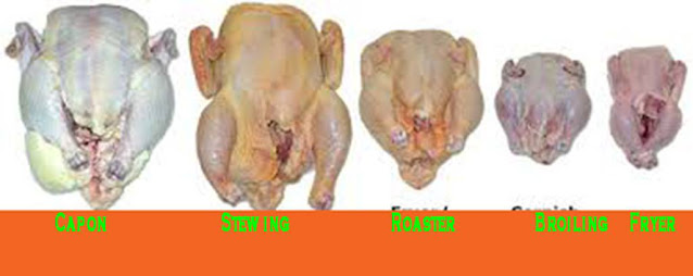 Different Chicken Different Dishes