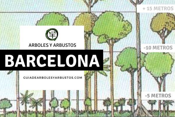 Arboles y arbustos de la provincia de Barcelona, España, por estratos
