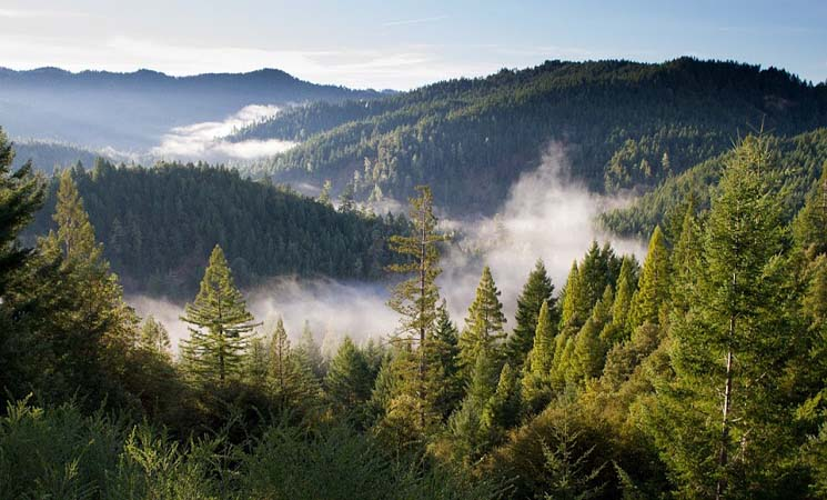 Pengertian Ekologi dan Ekologi Hutan