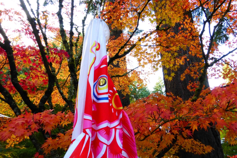 koi banner Portland Japanese Garden