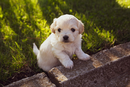 Tips Melatih Anjing Agar Cepat Jinak