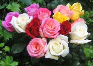 toko bunga di bekasi- toko bunga bekasi- handbuket bekasi- hand buket di bekasi- toko bunga online- toko bunga murah di bekasi- bunga papan bekasi- bunga papan di bekasi- bunga vase bekasi- bunga rangkaian bekasi- bunga rangkaian di bekasi- bunga box bekasi- bunga box di bekasi- bunga cikarang- toko bunga di cikarang