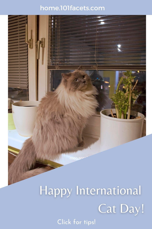 Happy International Cat Day!
