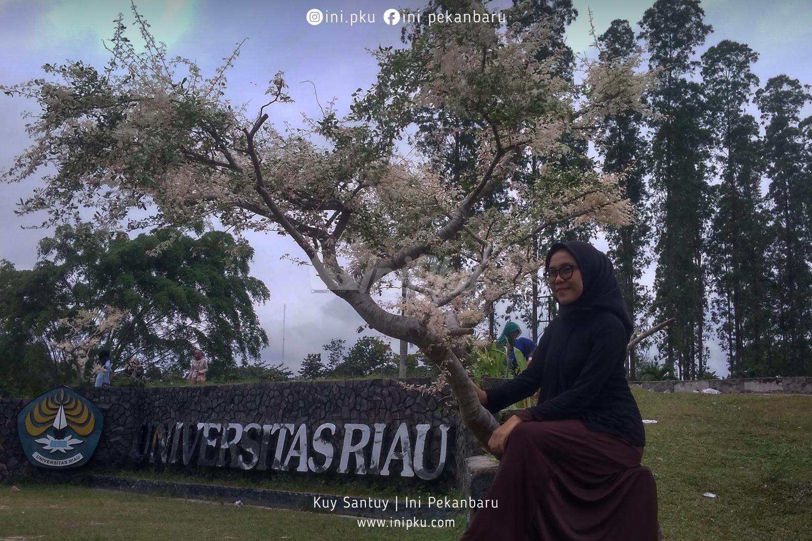 bunga sakura jepang spot foto di universitas riau kota pekanbaru