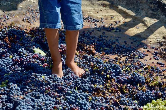 スペインのリオハのワイン祭りで子供がぶどう踏んでいる様子