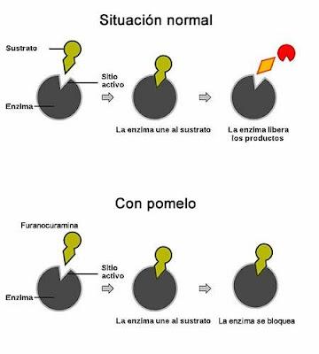complejo enzima sustrato