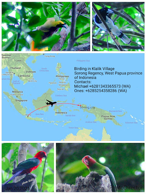 birding tour to Sorong regency