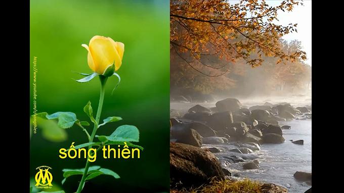 SỐNG THIỀN - Bạn có ba triệu chứng này của Yêu và Thiền chưa?