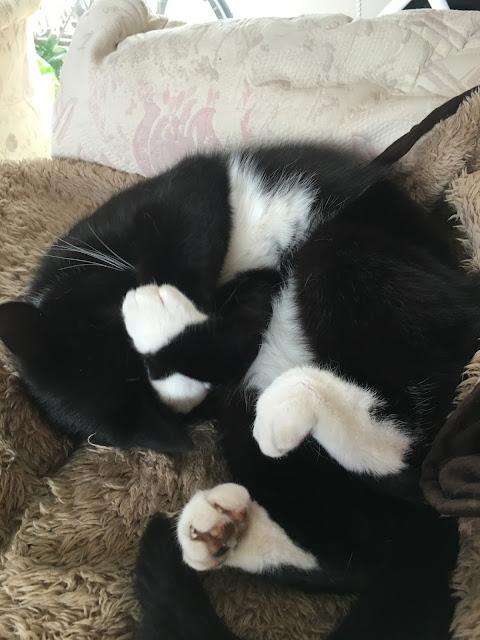 Nigel Cat