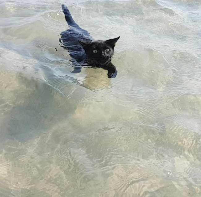 nathan a cat from Queensland loves to swimming