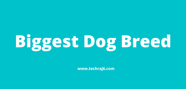 Biggest Dog Breed