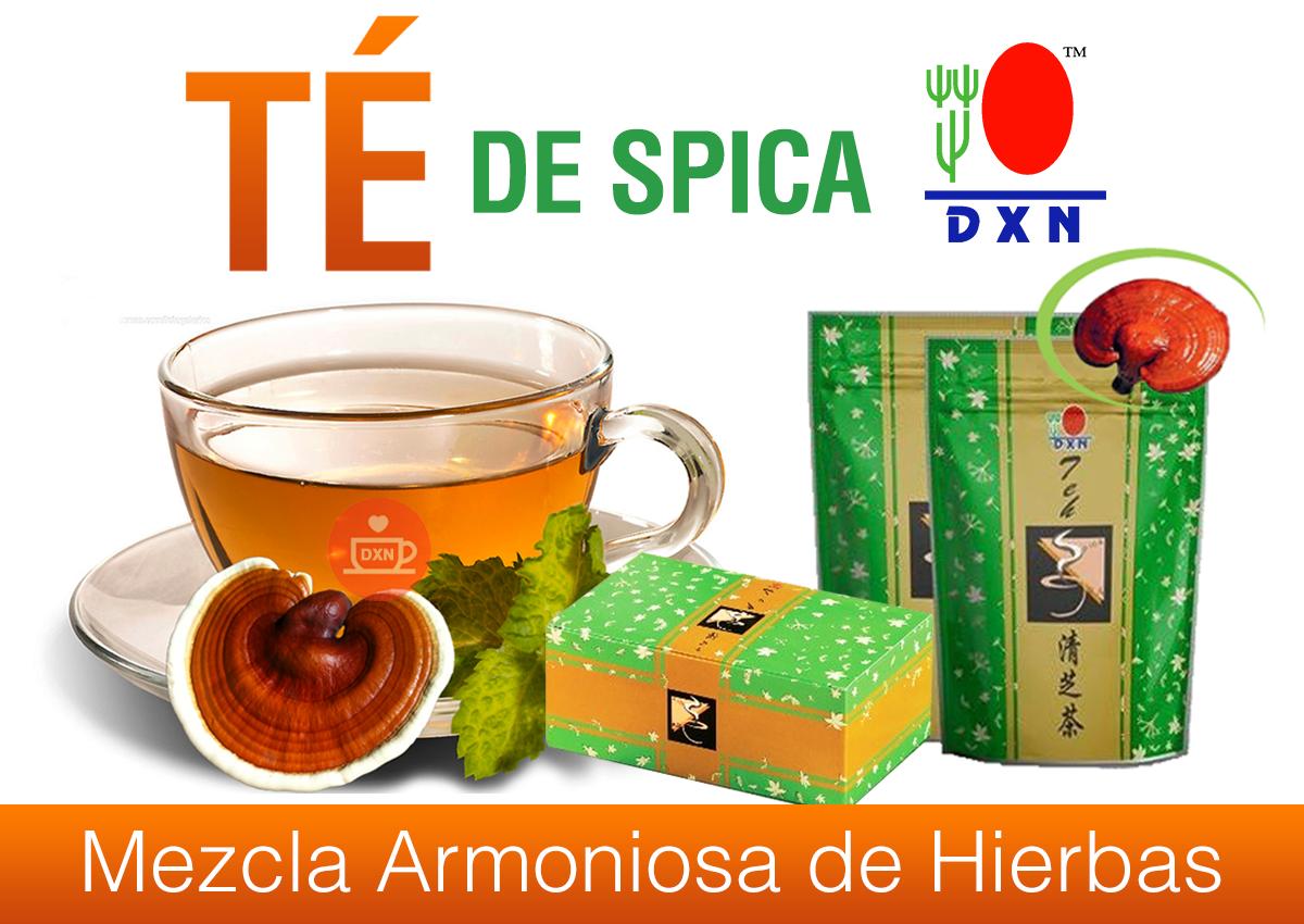 Ganoderma lucidum tea para adelgazar