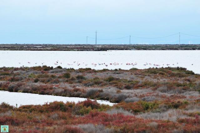 Laguna La Tancada, Delta del Ebro