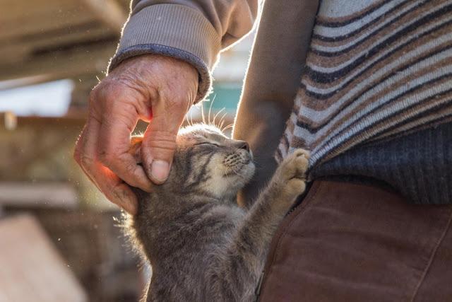 Житель Калуги убил своего собутыльника из-за того, что мужчина обидел его котенка
