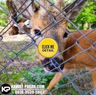 pagar kawat harmonika untuk kebun binatang