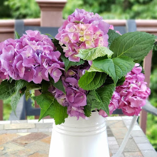 Pink-purple-hydrangeas-gouache-painting-Merrill-Weber