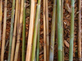 bambu-tidak-diserang-rayap.jpg