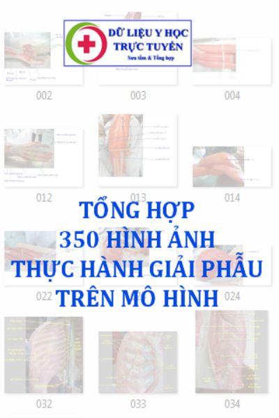 350 Hinh anh thuc hanh giai phau tren mo hinh
