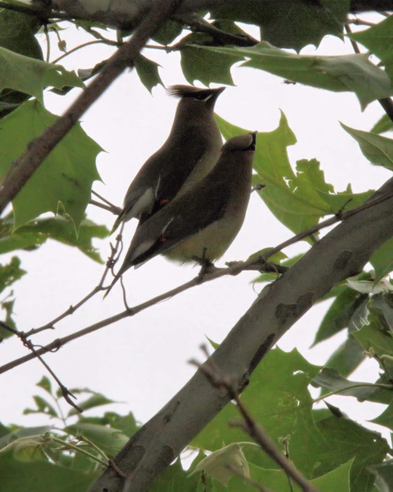 Birds from Behind : 16 June 2013