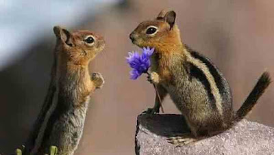 You should not have given me flowers squirrels