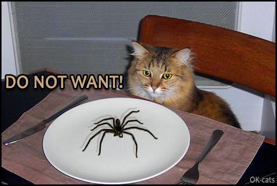 Photoshopped Cat picture • Hungry kitty does not want to eat a giant spider. DO NOT WANT! You know that I'm vegan!