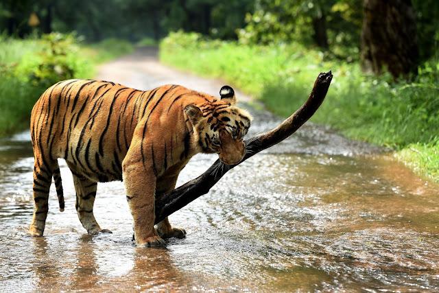 TD1-Wildlife-In-Pune