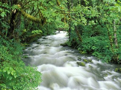 yagmur ormanında akar su