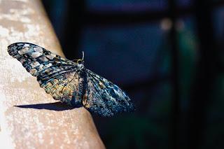 Butterfly Inmarathi
