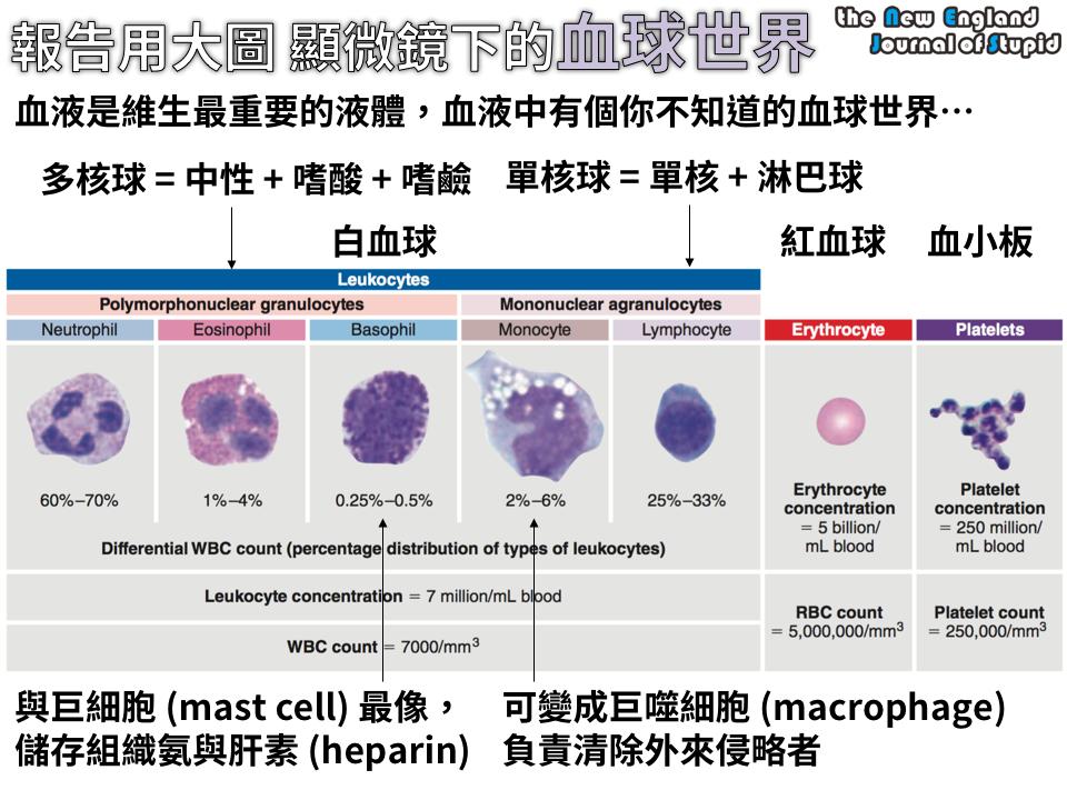 [生理學] 報告用大圖:白血球的功能。 你知道嗜鹼性球、單核球在做什麼嗎? - NEJS